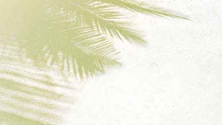 Palm leaf shadows on a white sand on tropical beach. Trendy holiday concept. Selective focus.
