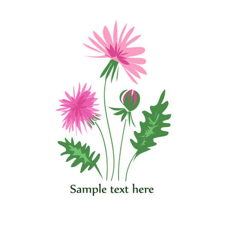 flowers fluffy: Card with pink flowers isolated on white background.Vector Illustration