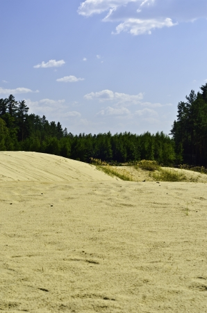 pacification: Sand-dunes in a pine-wood on a background blue sky with white clouds