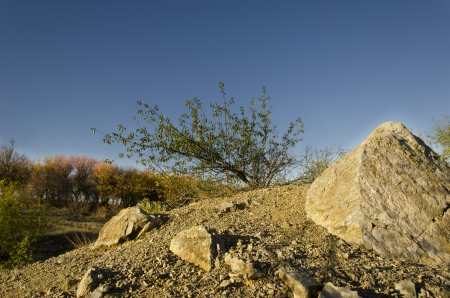 enormous: Be single bush with bits and pieces of green leaf on the top of hill with a few enormous stones