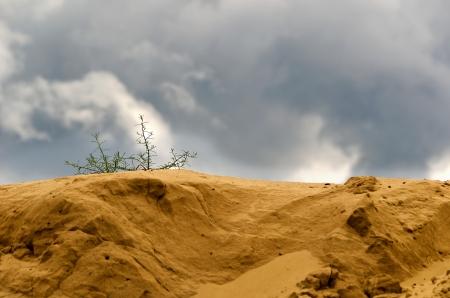 Be single bush of grass on a sandy barkhan before a storm.