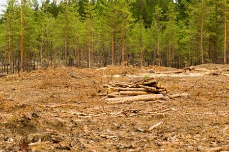 Heap of logs on a deforestation.