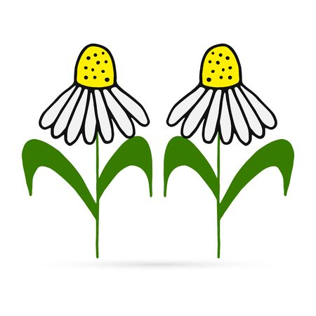 doodle flower icon, kids hand drawing line art camomile, vector illustration