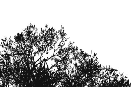 silhouette of wood in forest isolated on white, dry trees, doodle style, vector stock illustration Vettoriali