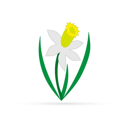 Narcissus isolated on white. Color doodle flower hand drawing art. Flower vector stock illustration