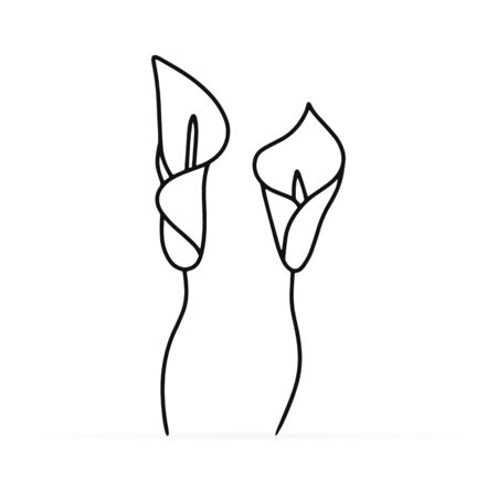 Doodle calla lilies icon isolated on white. Sketch flower. Coloring page book. Hand drawing line art. Outline vector stock illustration. EPS 10 Ilustrace