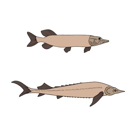 Doodle fish. Sturgeon and pike icon isolated on white. Seafood Hand drawing art line. Sketch vector stock illustration. EPS 10 Vettoriali