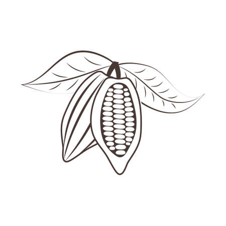 Doodle cocoa icon isolated on white. Hand drawing line art. Chocolate food. Sketch vector stock illustration. EPS 10