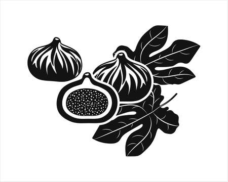 Fig with leaf set icons isolated on white. Stencil fruit. Vector stock illustration.