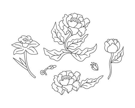 Doodle coloring flower with leaf isolated on white. Bundle hand drawing art line