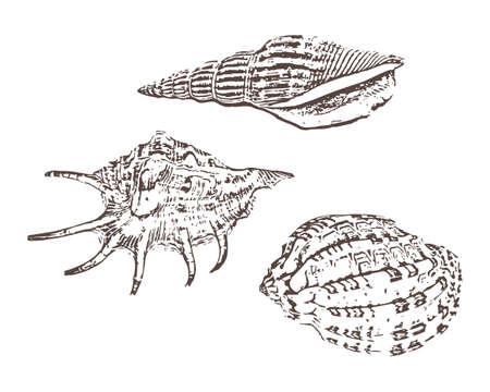 Doodle shellfish icons isolated on white. Hand drawing sketch, Vector stock illustration. EPS 10 Vektoros illusztráció