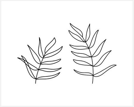 Doodle leaf of palm or fern set icon isolated on white. Sketch nature. Part tree. Plant vector stock illustration. EPS 10 Illustration