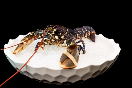 Blue lobster on ice and black background Banco de Imagens