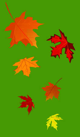 whirling: Vector illustration of an autumnal maple leaf fall on a green background