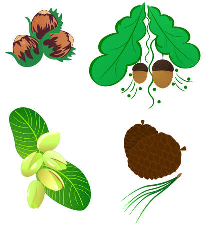 Collection various delicious nuts. Vector illustration nature nuts Vector