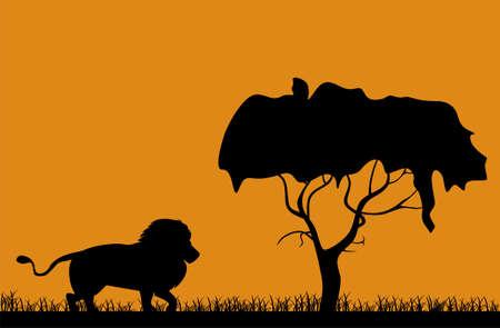 Sunrise in Africa, lion walks around his possessions Vector