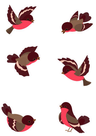 sparrows: Set funny robin birds, vector illustration, object isolated