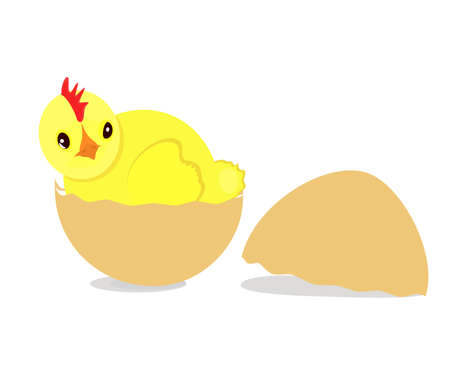 яичная скорлупа: Young Chick sitting in Eggshell. Easter symbol