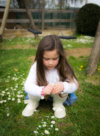 child collects daisies in an outdoor playground photo