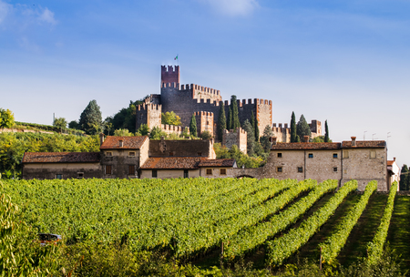 castle: View of Soave (Italy) surrounded by vineyards that produce one of the most appreciated Italian white wines, and its famous medieval castle.