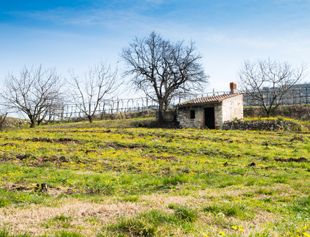 vibrant cottage: Spring blooms in the Tuscan countryside, Italy