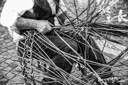 salix: Artisan builds wicker baskets using the branches of Salix viminalis.