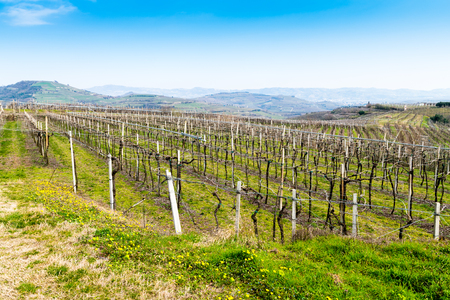 champagne region: vineyards on the hills in spring, Soave, Italy Stock Photo