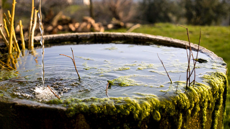 trickle: A trickle of water falls into a round tub of old mossy stone.