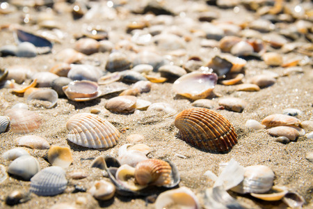 formed: Background formed by shells on the seashore. Stock Photo
