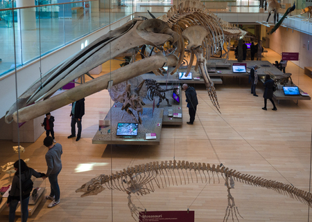 Trento, Italy - November 19, 2017: The MUSE is the Museum of the Sciences of Trento. The interior is characterized by a big void where suspended tassidermized animals. Redakční