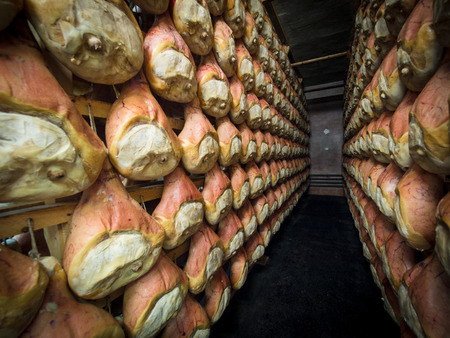 Thighs of ham during the curing process hanging in a cellar. Stock Photo
