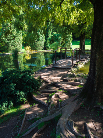Garden with pond and ancient trees that protrude the roots from the ground. 版權商用圖片