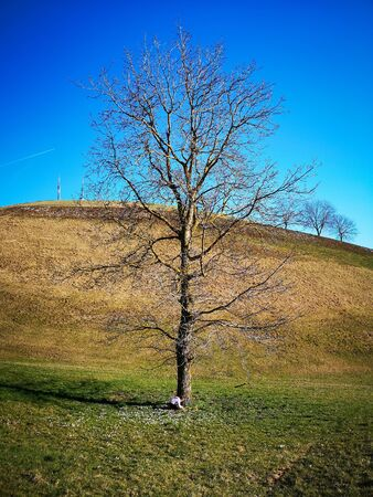 Lonely bare tree in the hills and blue sky.