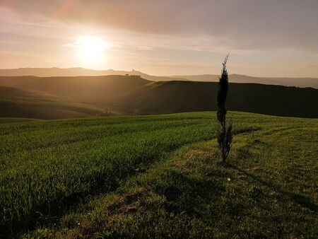 Tuscan landscape at sunset. Sinuous green hills at dusk.