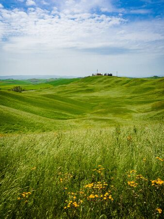 Tuscan landscape in spring. Sinuous green hills with yellow flowers. Stock Photo