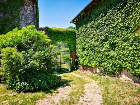 Old country house covered with climbing ivy.