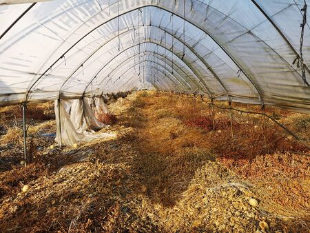Empty greenhouse in autumn after melon harvest. 写真素材