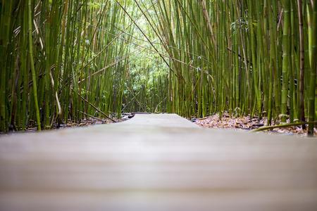top seven: Bamboo Forest Bridge Walkway