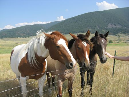 Gorgeous group of horses on a pasture