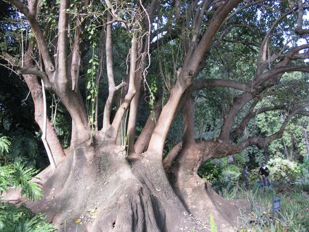 huge tree: huge tree with many branches Stock Photo