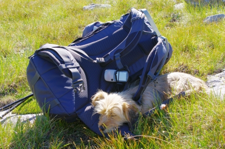 Guard dog and backpack in mountain Rila, Bulgaria Stock Photo - 17322165