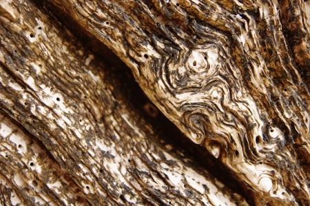 Dry wood on beach