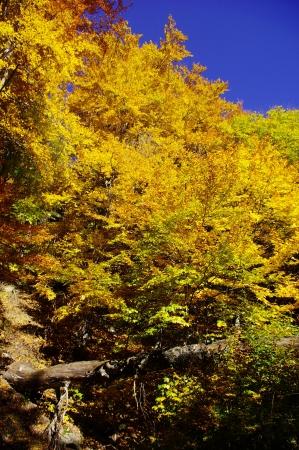 the balkan: Autumn in Central Balkan National Park, Bulgaria