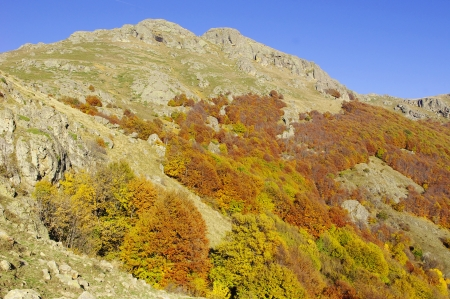 Autumn in Central Balkan National Park, Bulgaria photo
