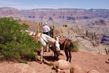 kaibab trail: Horseman in the Grand Canyon, Arizona, USA Stock Photo