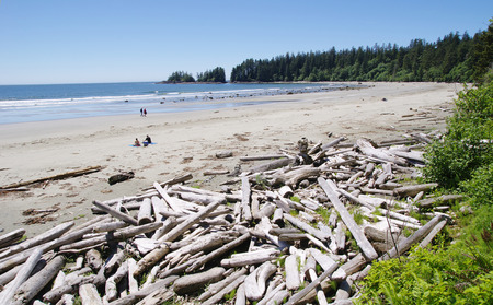 Low tide on the Long Beach with driftwoods   Vancouver Island, British Columbia, Canada photo