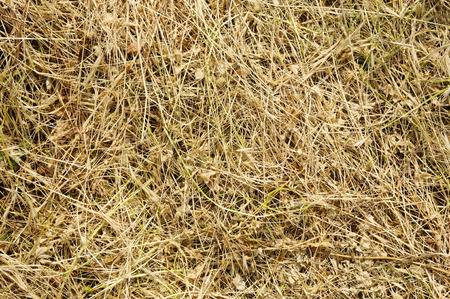 clippings: Background from yellow clippings grass