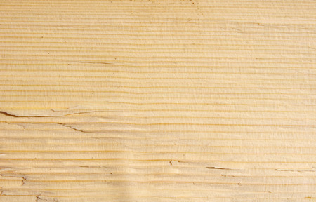 grooves: Split beech log closeup in sunny day