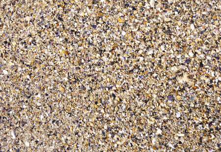 Wet sand with crushed sea shells  in sunny day photo