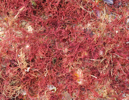 海藻が波に砂の上洗浄 写真素材 - 35769904